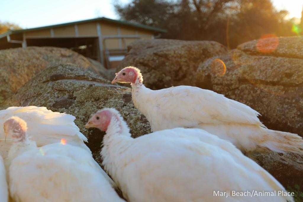 nov-17-2016-turkey-a-1-of-1