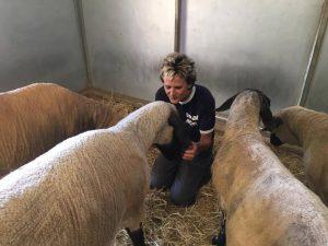sheep-b-friends